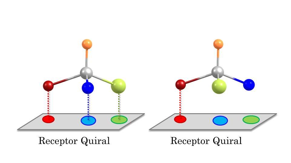 receptorquiral